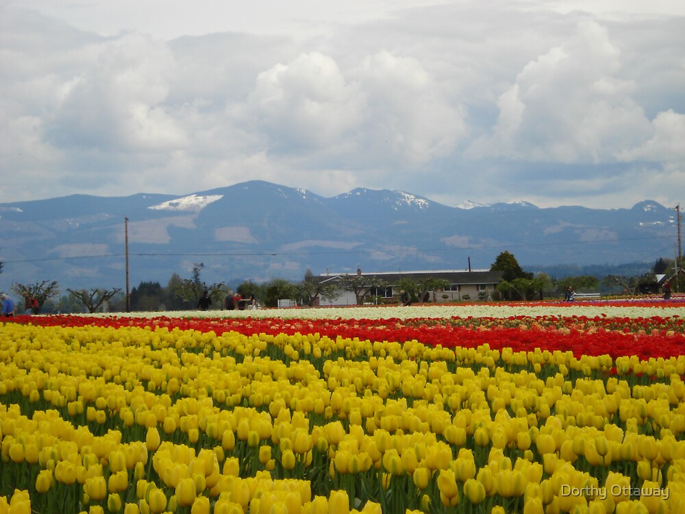 Mountains and Tulips by Dorthy Ottaway