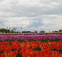 Tulips by Dorthy Ottaway
