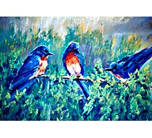 Backyard Gossip Photographic Print