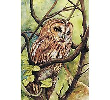 Owl from Butterfingers and Secrets Photographic Print