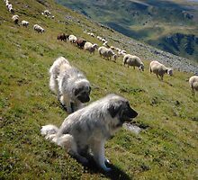 Awesome Great Pyrenean Mountain Dog