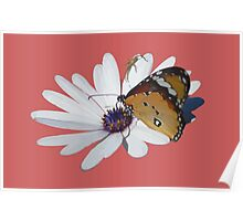 White Daisy and Butterfly Vector Background Removed Poster