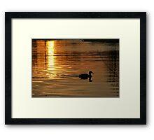 Sunset Solo Framed Print