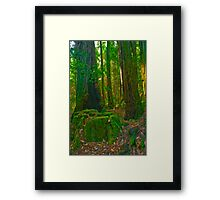 The Forest for the Trees Framed Print