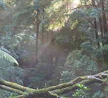 Tasmanian Rain Forest  late afternoon, Russell Falls by Tom McDonnell