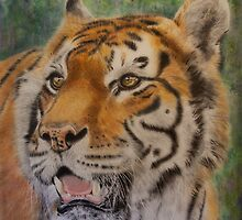 Bengal Tiger by Jill Tisbury