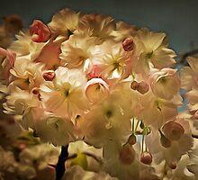 Cherry Blossom in Retro by brijo