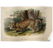 James Audubon - Quadrupeds of North America V3 1851-1854  Jaguar Poster