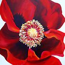 Big Red Poppy by marlene veronique holdsworth