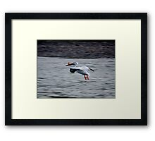 Dinner Flight Framed Print