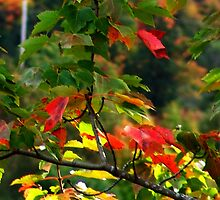 Fall Medley by Jann Ashworth