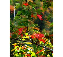 Fall Medley Photographic Print