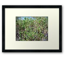 Willow Wall Framed Print