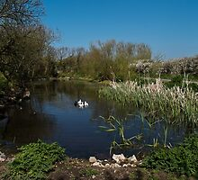 Farm Pond by Country  Pursuits