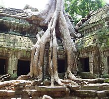 Ta Prohm Cambodia by michellematho