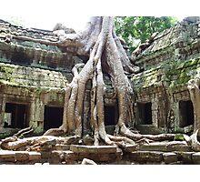Ta Prohm Cambodia Photographic Print