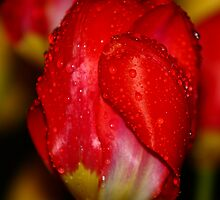 Raindrops on Red by Brian Dodd