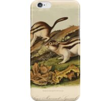 James Audubon - Quadrupeds of North America V3 1851-1854  Jay's Marmot Squirrel iPhone Case/Skin