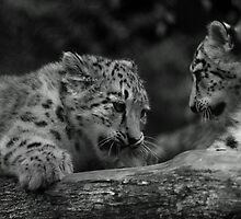 Cub in Black and White 7 by DanielTMiller
