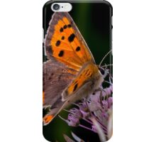 Copperwing Butterfly iPhone Case/Skin