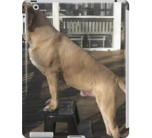 Young English Mastiff