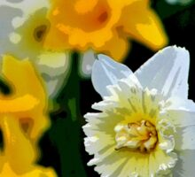 White and Yellow Daffodils in the Abstract Sticker