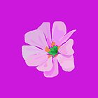 A Single Pink Flower by masabo
