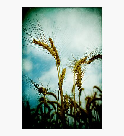 harvest time again Photographic Print