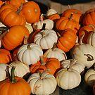 Market - Mini Pumpkins by rabeeker