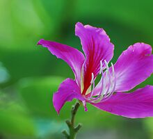 Purple on Green by Jim Jankowski