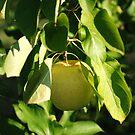 Golden Apple by rabeeker