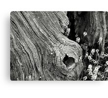 Take Time to See Canvas Print