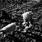 chasing lambs by David Page