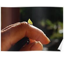 Leaf hopper? Poster
