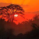 African Sunrise, Amboseli National Park, Kenya, Africa. by photosecosse /barbara jones