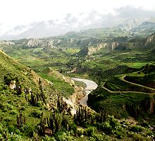 Colca Canyon Peru by michellematho