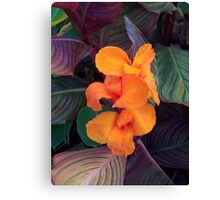 Orange Dazzler Canvas Print