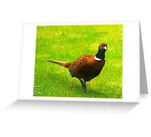Pheasant #1 Greeting Card