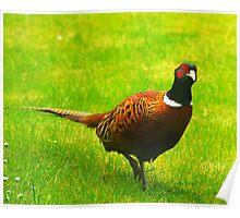 Pheasant #1 Poster
