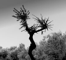 Dancing Tree by villrot