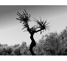 Dancing Tree Photographic Print
