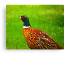 Pheasant #2 Canvas Print