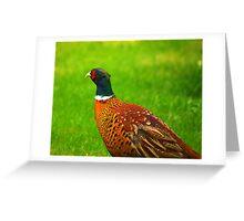 Pheasant #2 Greeting Card