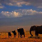 Kilimanjaro and Elephants at Sundown. Amboseli, Kenya, Africa. by photosecosse /barbara jones