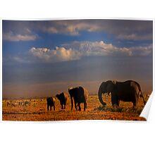 Kilimanjaro and Elephants at Sundown. Amboseli, Kenya, Africa. Poster