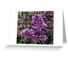 Judas tree bloom Greeting Card