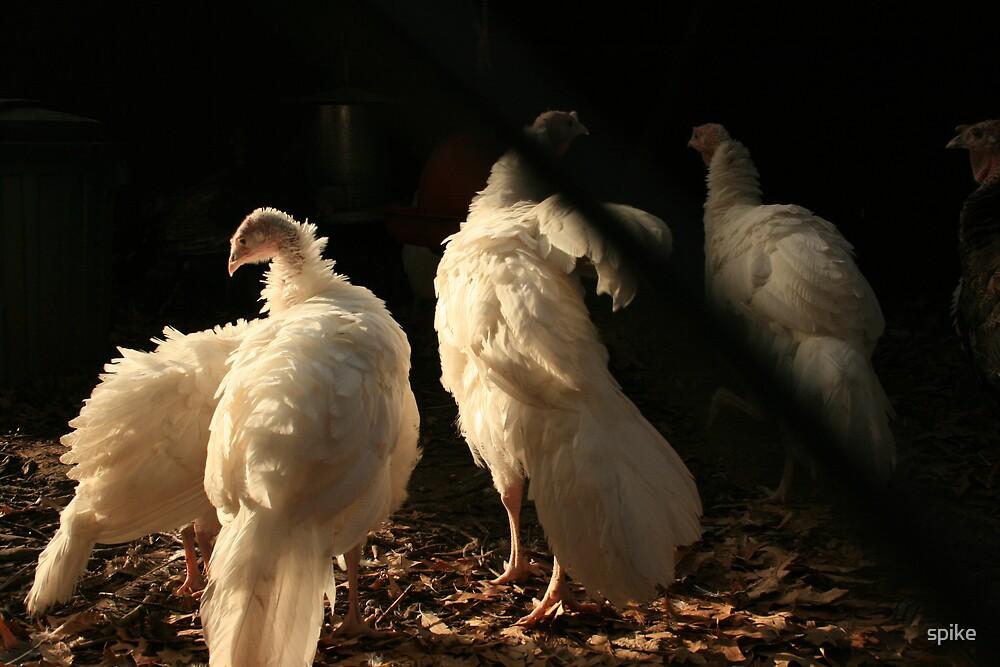 the turkeys by spike