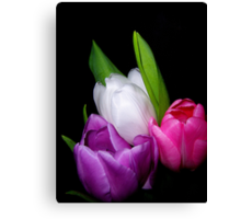Tulips in Pastel Canvas Print