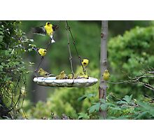Gold Finches Photographic Print
