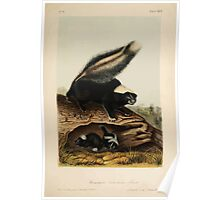 James Audubon - Quadrupeds of North America V1 1851-1854  Common American Skunk Poster